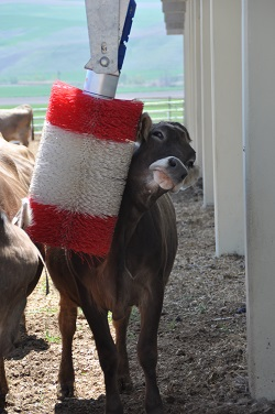 Electric Cow Brushes
